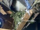 tree-damaged-roof-repair-14