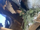 tree-damaged-roof-repair-16