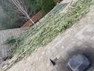 tree-damaged-roof-repair-20