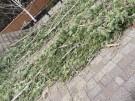 tree-damaged-roof-repair-21