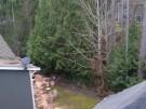 tree-damaged-roof-repair-3