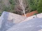 tree-damaged-roof-repair-5