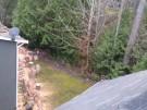 tree-damaged-roof-repair-6