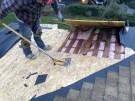 fallen-tree-roof-repair-16