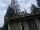 fallen-tree-roof-repair-34